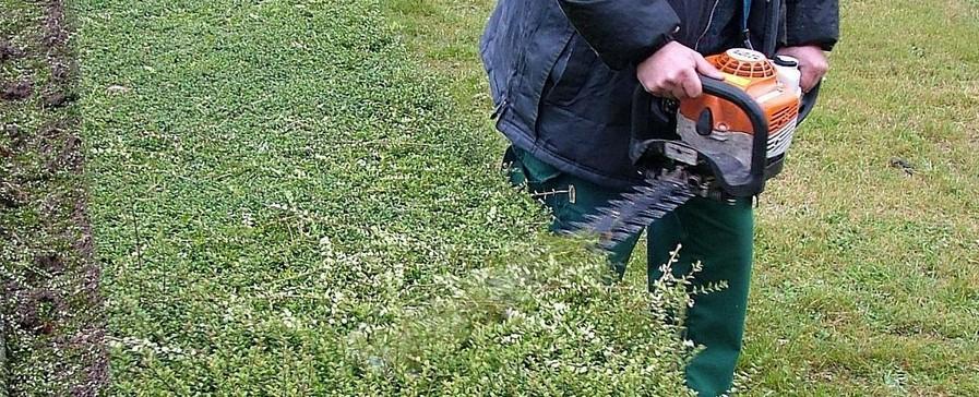 Titre professionnel ouvrier du paysage for Jardinier paysagiste gironde